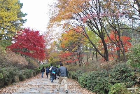 釜山の紅葉