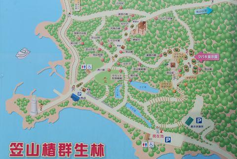 萩市笠山椿群生林