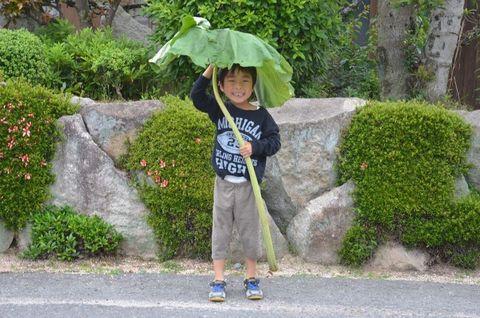 トトロの傘