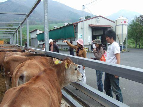 蒜山高原といえばジャージー牛