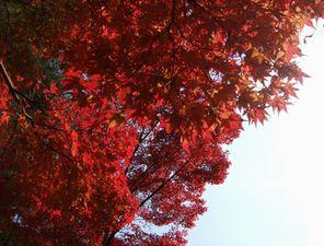 紅葉の見頃